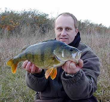 Окунь, Common Perch,Perca fluviatilis